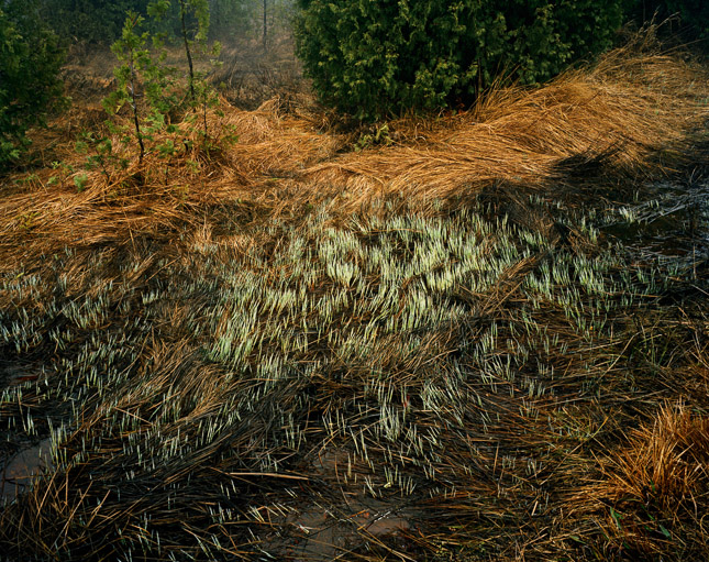 OLD_LAND_GRASSES_01_81